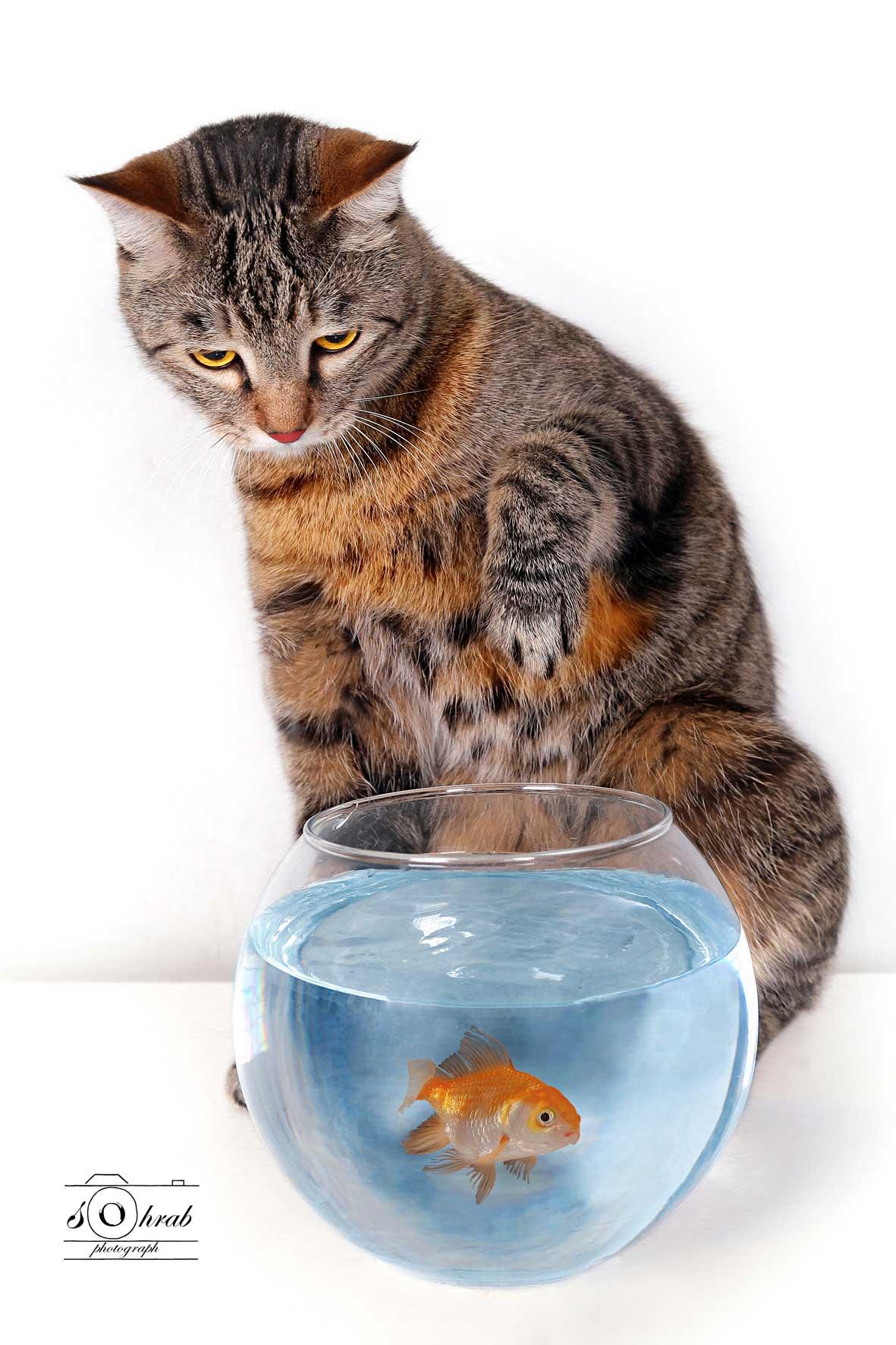 انجمن حمایت از حیوانات تهران