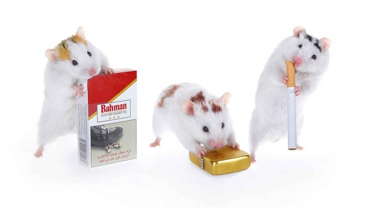 عکاسی دخانیات سیگار بهمن