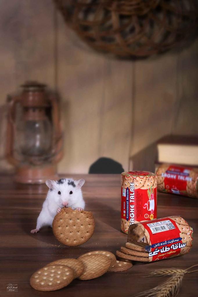 biscuit  saghetaliei   بیسکوییت ساقه طلایی عکاسی تبلیغاتی سهراب نعیمی آتلیه صنعتی